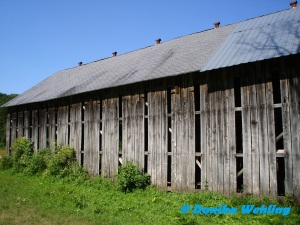 tobacco shed 2 -
